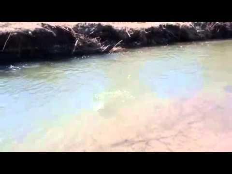 카지노후기 【W O W 7 7 8 。C ㅇ M 】카지노후기 동영상