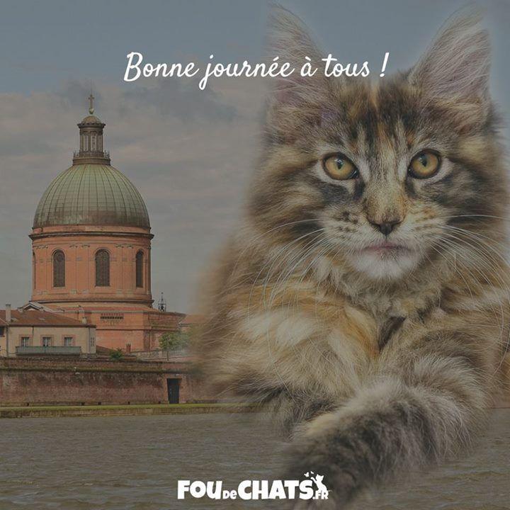 Accessoires pour chat toulouse for Salon des animaux toulouse 2017