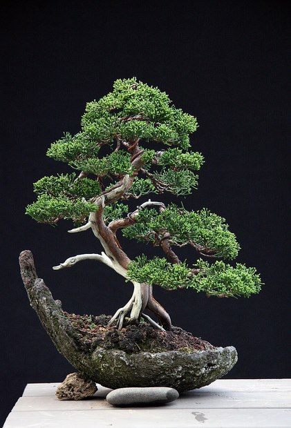 I want to lose myself in Time, the Time being Now! Tree Of Bonsai