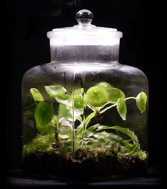 Der Künstler und Biologe Ulf Soltau stellt seine speziellen Flaschengärten vor: die Hermetosphäre: