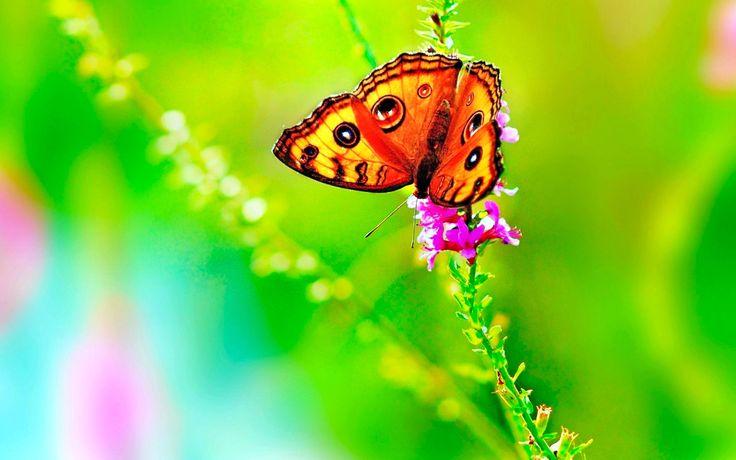 butterfly #4k wallpaper (3840x2400)
