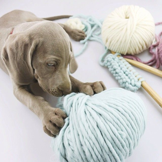 The Wool in Aquamarine   We Are Knitters