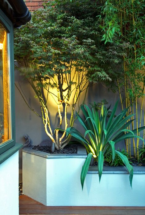 contemporary planting irrigation of architectural plants
