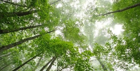 Green Living tips from The Nature Conservancy