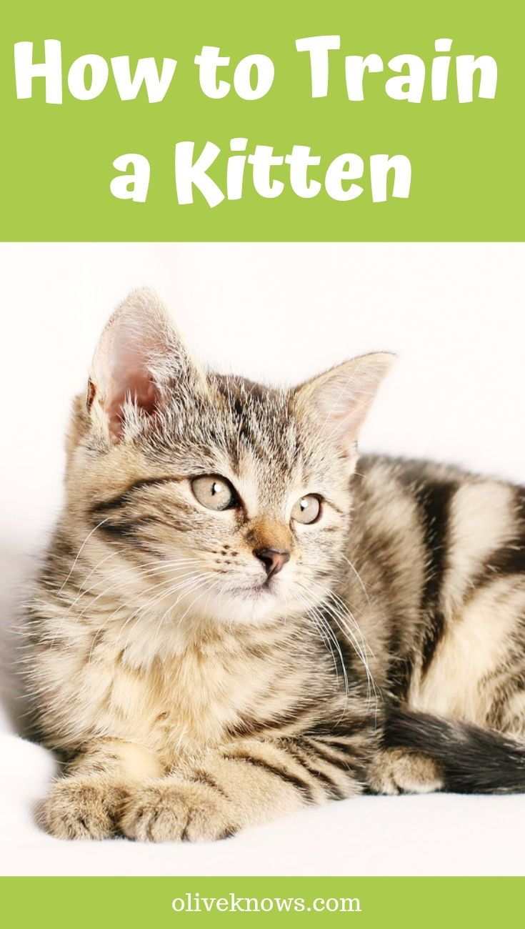 How To Train A Kitten Oliveknows Training A Kitten Sick Cat Hipster Cat