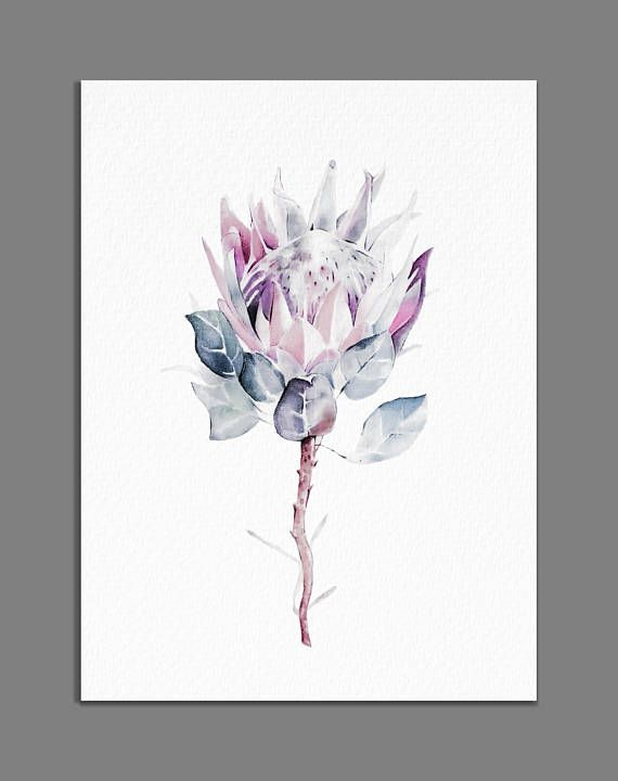 Protea Painting Minimalist King Protea Print Giclee of
