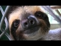 sloth orphanage, just watched this show on animal planet. Adorable!