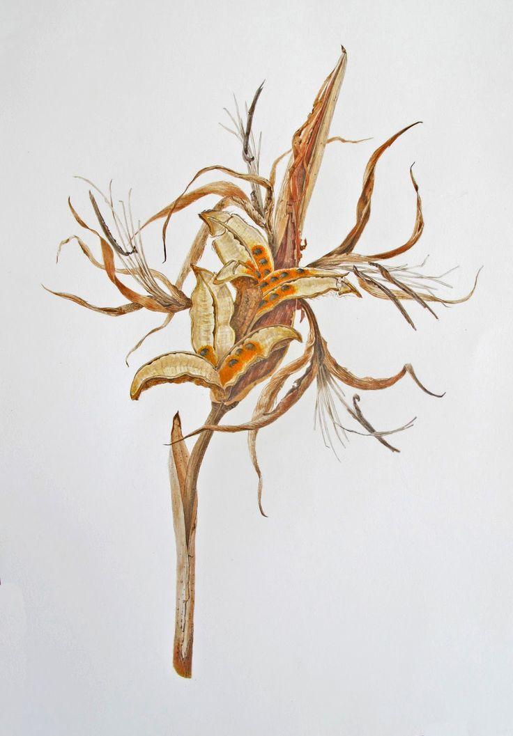 Botanical Art - Holiday Sketching: Botanical Art