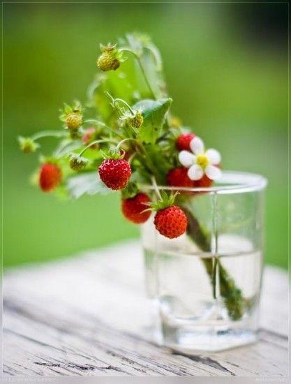 Sweden smultron - mini strawberries that has a delicious unique taste. Growing wild.