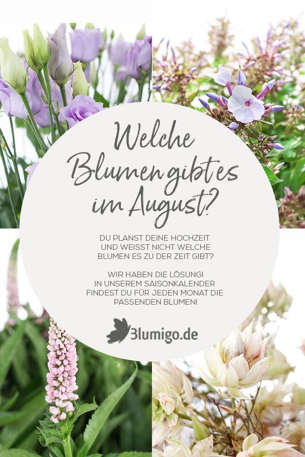 Welche Blumen Gibt Es Im August Schnittblumen Saison Kalender Blumen Geben Schnittblumen Saison Blumen
