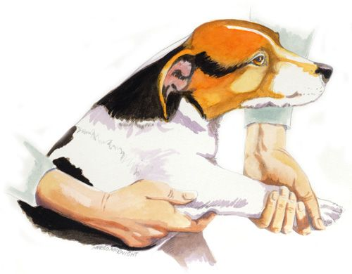 Canine massage for those who are perhaps interested in pursuing this type of massage or to instruct a client if you are already in the field of animal massage.