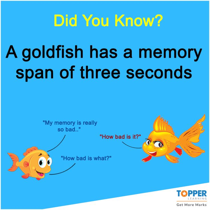 Didyouknow a goldfish has a memory span of three seconds for How long is fish good for