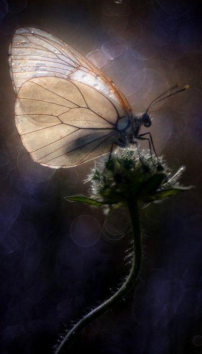 (by Alberto Di Donato) repinned by www.liberatingdivineconsciousness.com