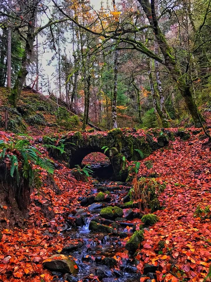 Reelig Forest in Autumn, Scotland, near Inverness