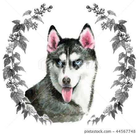 Siberian Husky Dog Painted By Watercolor Stock Details About Mr Z