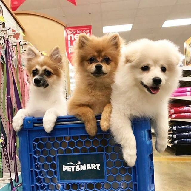 We Re Paw Sitive It S Time For A Field Trip To Petsmart Petsmart Field Trip Animals