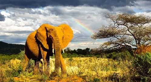 Habitat loss is one of the key threats facing elephants. Many climate change projections indicate that key portions of elephants' habitat will become significantly hotter and drier, resulting in poorer foraging conditions and threatening calf survival.