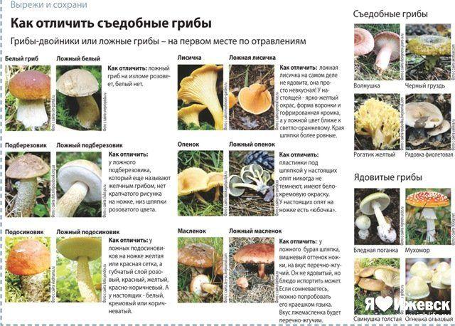 перепончатые грибы с описанием и фото самый страшный