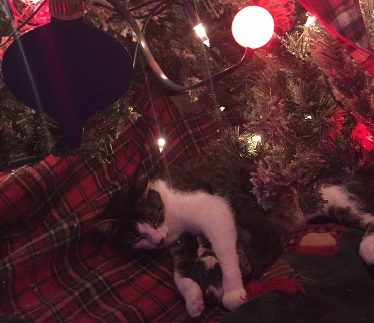 The new kitties are named Noel, Joy, Christmas, and Faith.