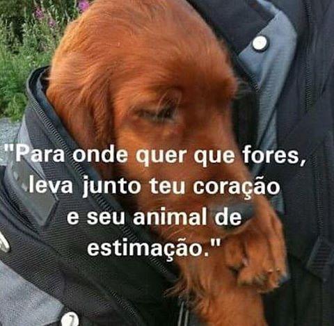 SIMMM!!! ❤️❤️❤️ #cachorro #amoanimais #filhode4patas #petmeupet #filhote #gato #amorincondicional #cachorroétudodebom