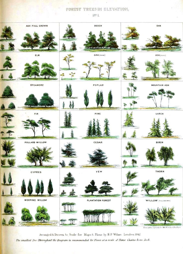 Design - Graphic - Mapping handbook -trees species - educational plate