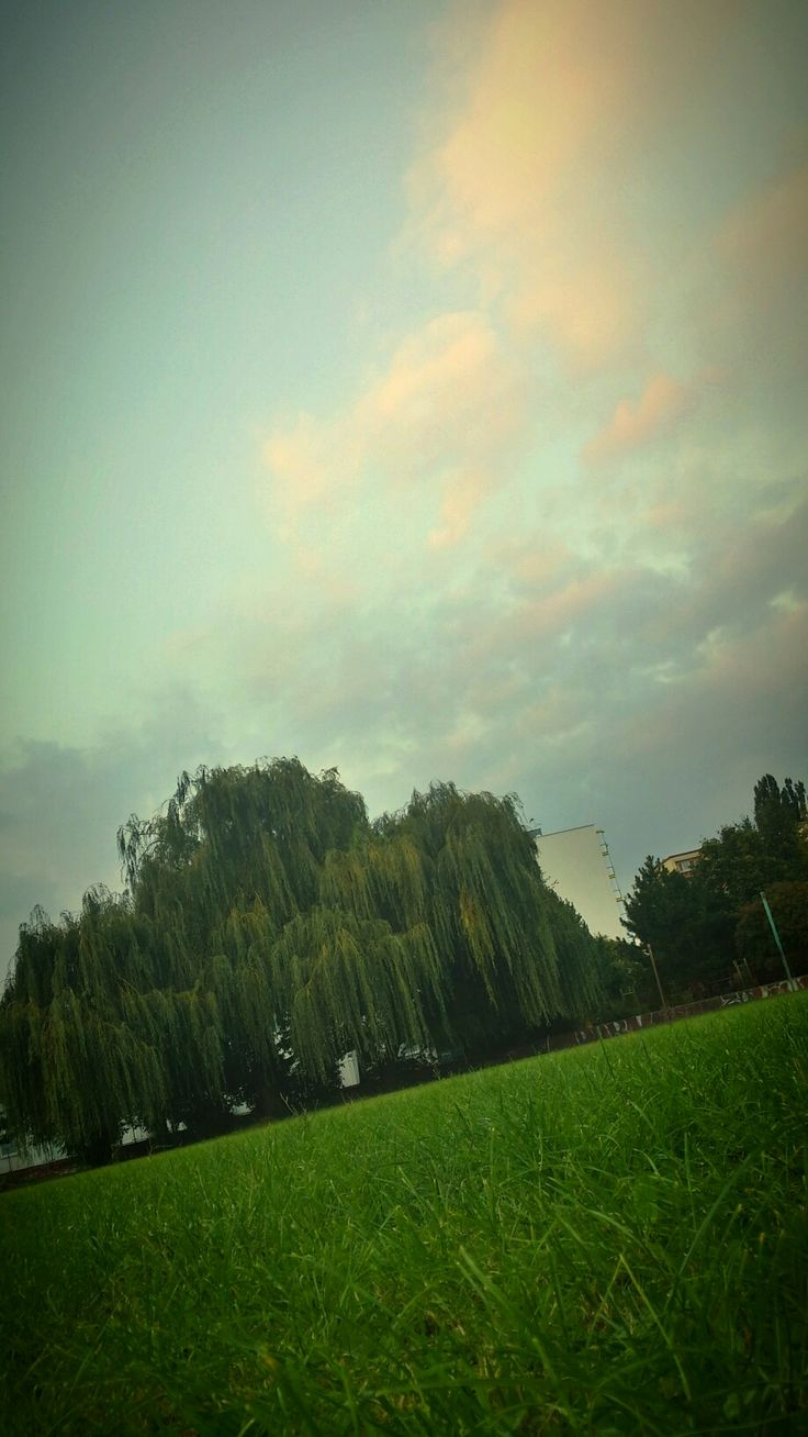 Tree of life #tree