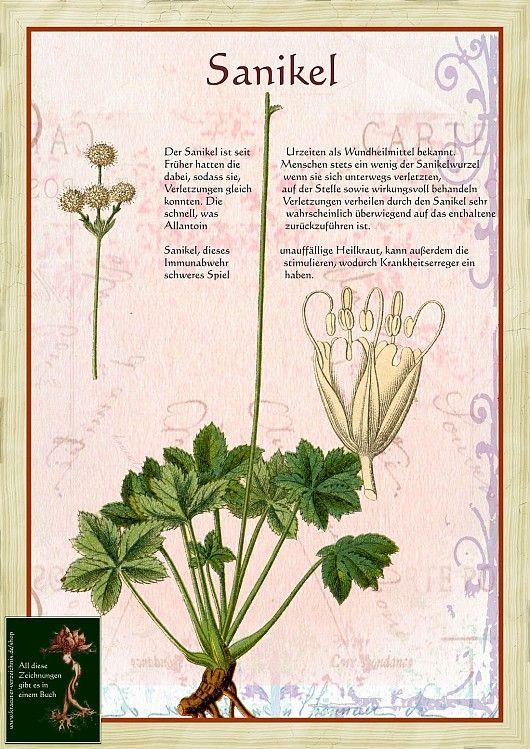 110 besten natur und wirkung bilder auf pinterest naturheilkunde heilpflanzen und kraut rezepte. Black Bedroom Furniture Sets. Home Design Ideas