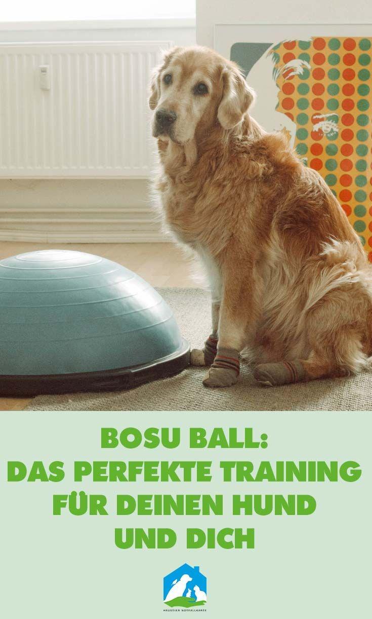 Wie Du Mit Diesem Hundetraining Nicht Nur Deinen Hund Sondern Auch Dich Selbst Fit Halten Kannst Hundchen Training Hundetraining Hunde