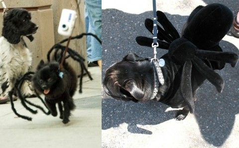 6 Funny Dog Halloween Costumes You Can Make With Little Or No Sewing. #dog #halloween #costume