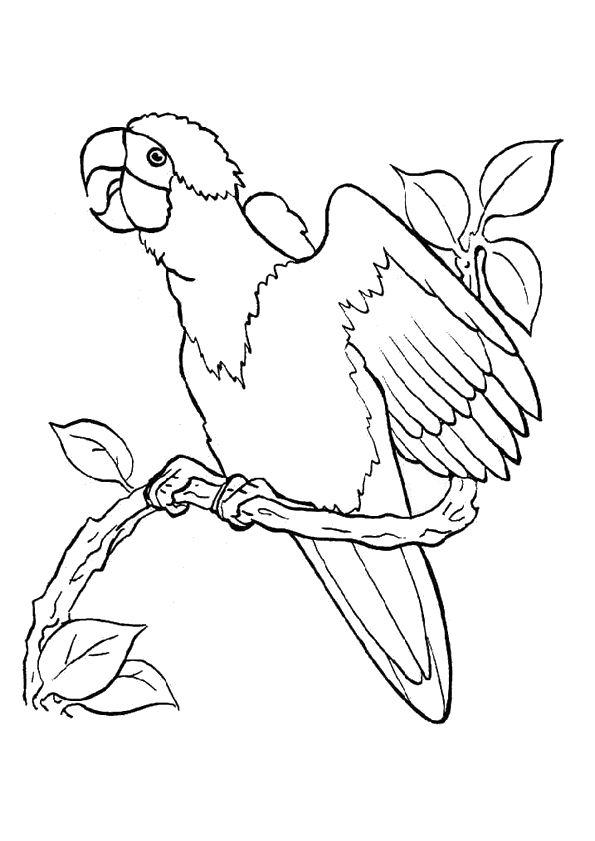 Dessin colorier d un perroquet sur une branche qui fait son cri coloriage - Dessins de perroquets ...