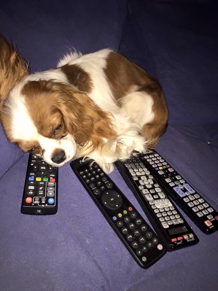 Můj Nejmilovanější Pejsek Charlie/My Most Beloved Dog Charlie