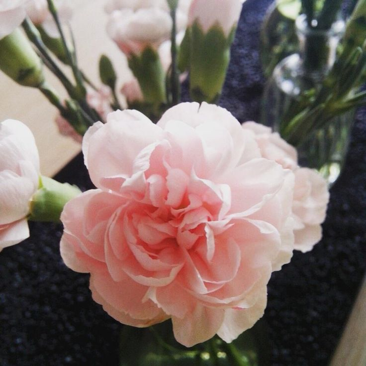 25 beste idee n over roze anjers op pinterest anjer bruiloft anjer bloemstukken en roze - Tafel roze kind ...