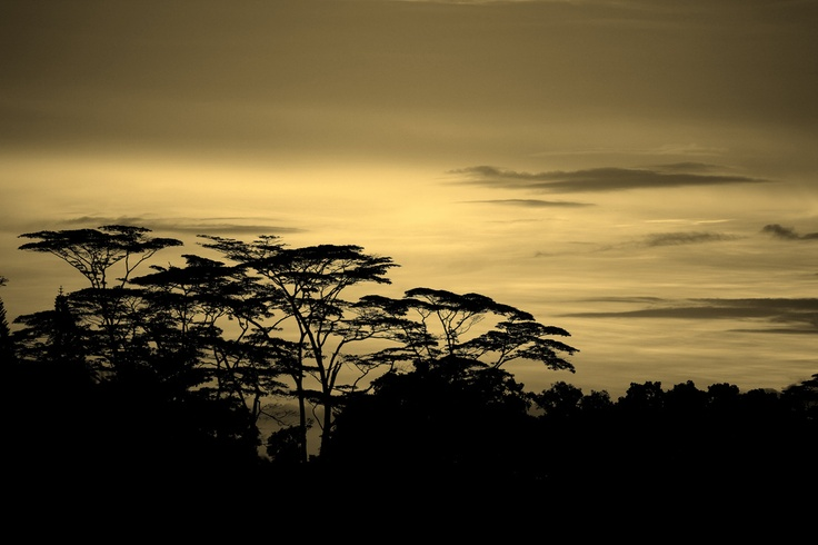 Sunrise in sepia