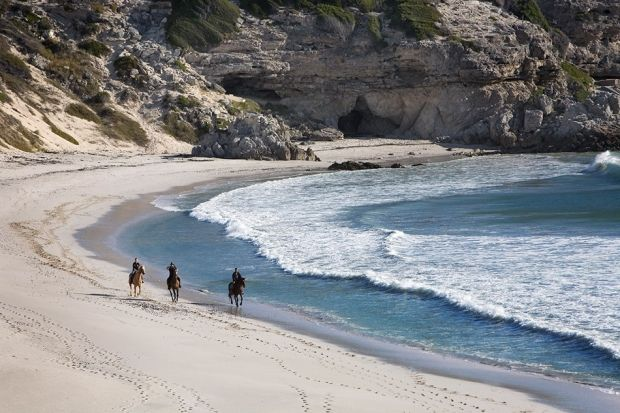 {Video of the week} Horseback riding | Grootbos #BeachHorseRiding #Horses #Travel http://www.grootbos.com/en/blog/travel/video-of-the-week-horseback-riding