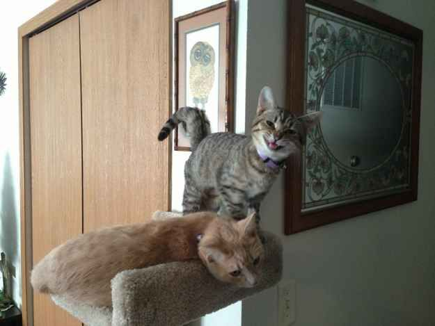 Cheesin' while your friend is visibly annoyed. | The 29 Most Cat Things To Ever Happen
