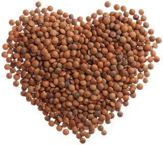 GPRS: Lentils: Health benefits