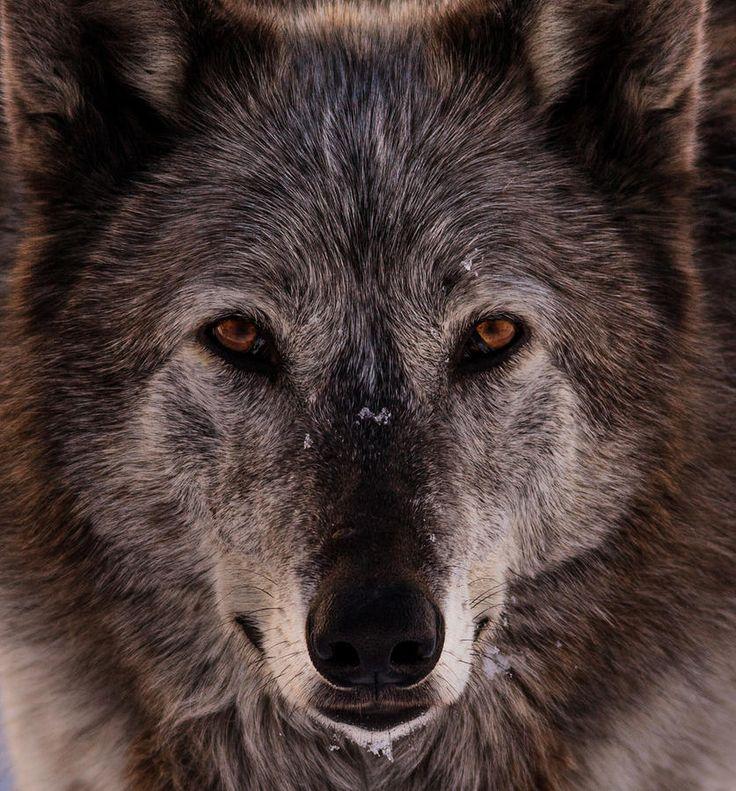 "beautiful-wildlife: ""Essence Of The Spirit by Jeremy Oliver """