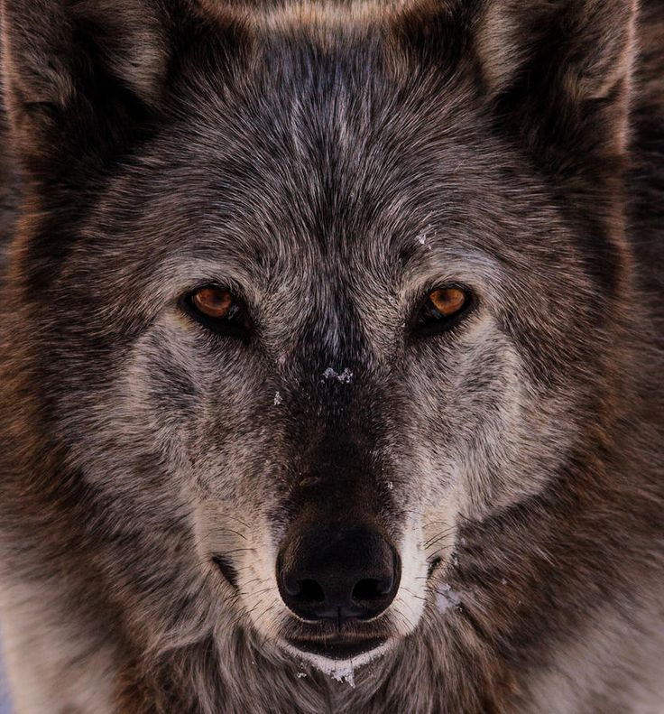 "beautiful-wildlife: ""Essence Of The Spirit by Jeremy Oliver """