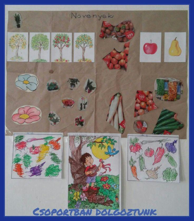 Növények osztályozása csoportmunkában (keresés, nyírás, halmazba rendezés, ragasztás), színezés