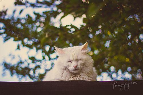 El sueño de la gatita Sofía.