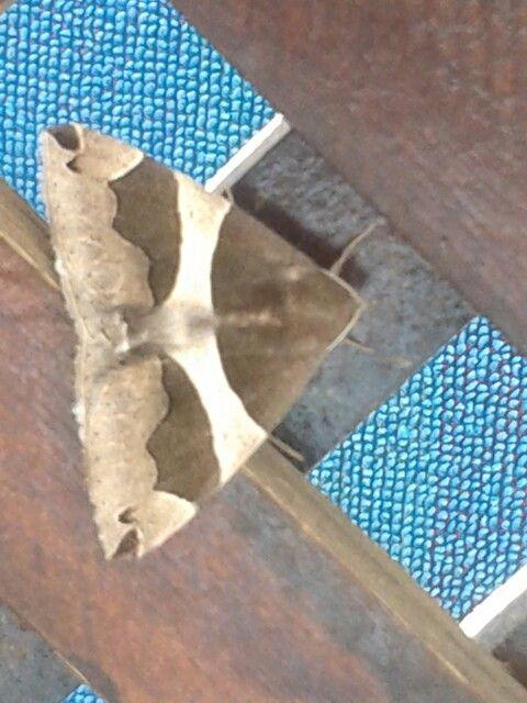 Butterfly in my garden...
