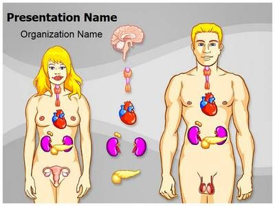 Human Endocrine System PowerPoint Presentation Template is one of the best Medical PowerPoint templates by EditableTemplates.com. #EditableTemplates #Health-Care #Human Endocrine System #Thyroid #Pituitary #Cartoon #Science #Organ #Heart #Gland #Woman #Digest #Scientific #Female #Section #People #Tissue #Endocrine #Male #Muscle #Pancreas #Digestion #Medicine #Symbol #Health #Digestive #Illustration #Healthy #Reproduction #Drawing