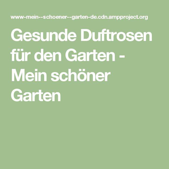 Gesunde Duftrosen für den Garten - Mein schöner Garten