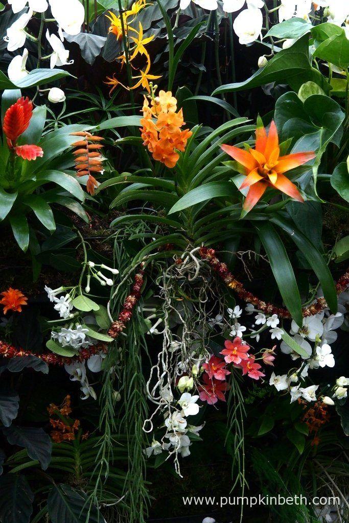 Behind the Scenes at the Kew Orchid Extravaganza 2017 - Pumpkin Beth