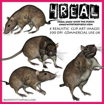4 Real! 4 Realistic Rat Clip Art Images - realistic animal clip art for teachers! OK to make resources to sell on TPT - clip art OK for digital whiteboards too!