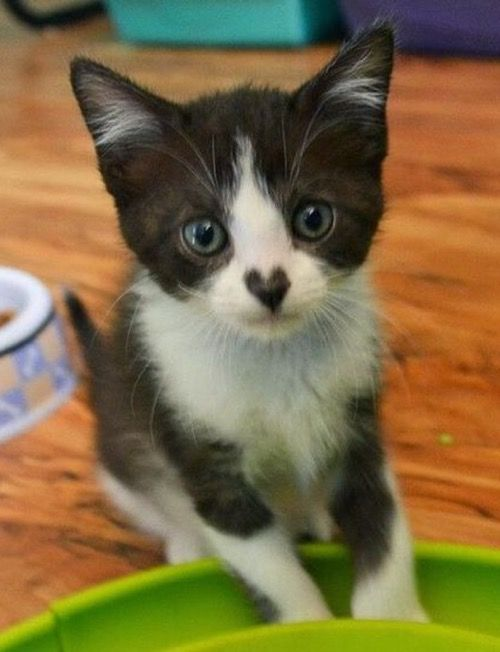 This little kitty has definitely got my heart…