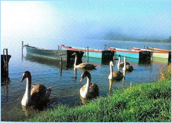 Le lac Saint-Point - Doubs Il se situe dans le département du Doubs, au sein du massif du Jura, Dans un large val entre la montagne du Laveron et celle du Fort Saint-Antoine, s'étale le lac de Saint-Point appelé lac de Dampvauthier au Moyen Âge, à l'époque des grands défrichements des moines cisterciens de l'abbaye de Mont-Sainte-Marie. Alimenté par le Doubs ce plan d'eau forme le quatrième lac naturel d'origine glaciaire de France.