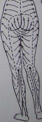 Celulitída, celulitída na bruchu, anticelulitídny program