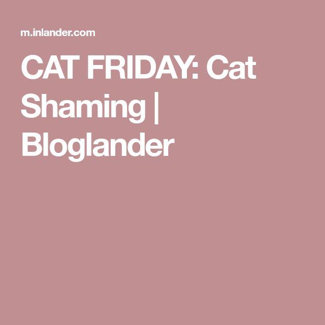 CAT FRIDAY: Cat Shaming | Bloglander