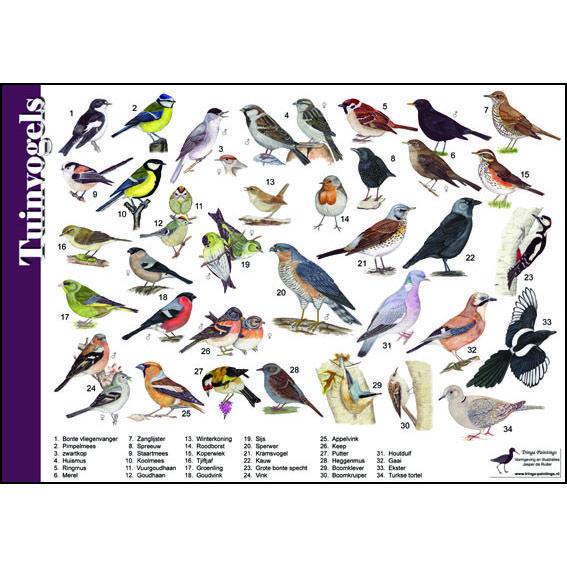 Herkenningskaart-Tuinvogels-910161.jpg (567×567)